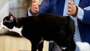 Разбор полета с котом-отказником
