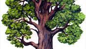 Ветродуй в С-Петербурге - Какие деревья наиболее опасны при сильном ветре?