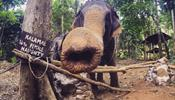 Бунт слонов на Ко Чанге