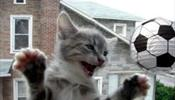 В С-Петербурге расставят котов-футболистов