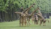 В «Елагин парк» выпустят механических жирафов