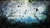 В «Жуковском» неправильно разгоняли птиц