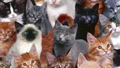 С котами, на крыше – благотворительности ради