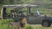 Royal Migration Camp в Танзании приглашает на знакомство