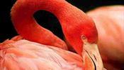 «Фламинго»: Прекрасные вести – туры по двести