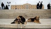 Загрызли туристку в Греции не бродячие собаки