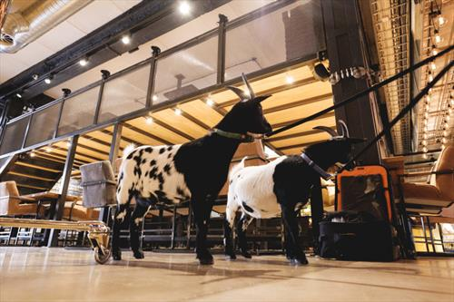 В Таллинне открылся новый концептуальный ресторан