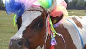 Ну наконец-то – в России пройдет парад коров