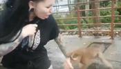 Укушенную обезьяной петербурженку на Пхукете отправили в СИЗО