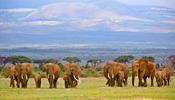 Они убили слонов, буйволов и львов