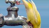 Туристов предупреждают, что Кейптаун, вероятно, останется без воды