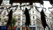 Мэрия Парижа собирается (частично) победить крыс