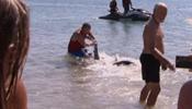 Уволили дедушку, скрутившего акулу