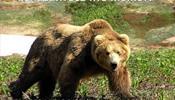 Челябинцы медведя в Польше не избивали