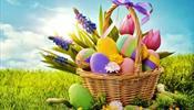 В TUI Россия нашли «корзины» для своих «яиц»